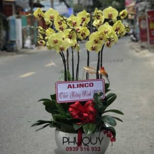 chau-lan-ho-diep-vang-phu-quy-tai-loc-9-190814-01