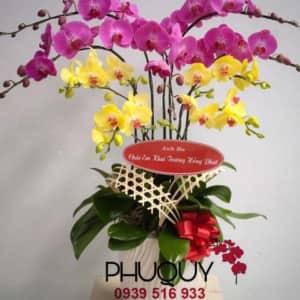 chau-lan-ho-diep-vang-tim-hong-phat-9-2100-00