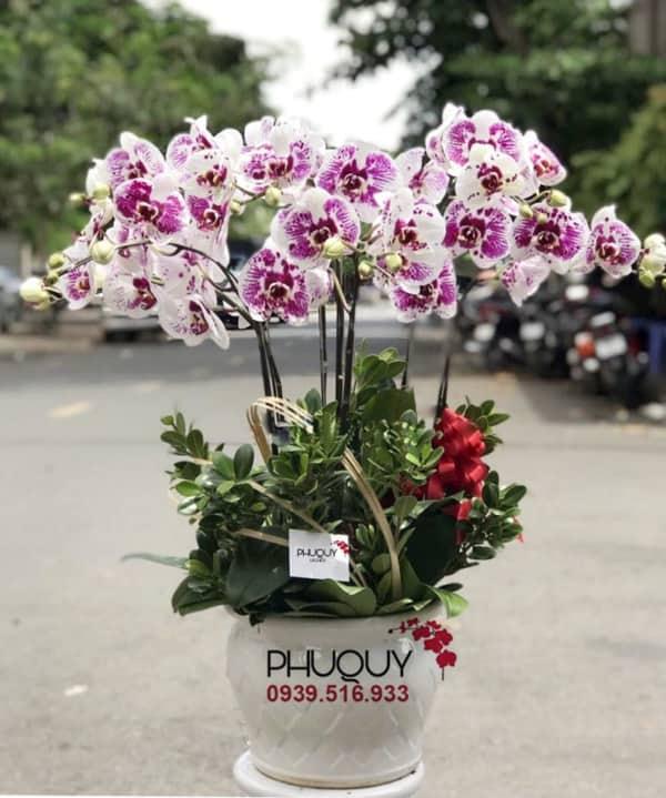 chau-lan-ho-diep-tim-hanh-phuc-an-khang-07-070221